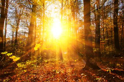 Herbstwald im Sonnenlicht